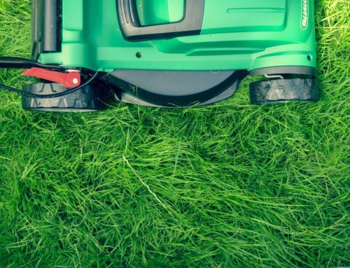 Growing pains: Why your mowing habits matter